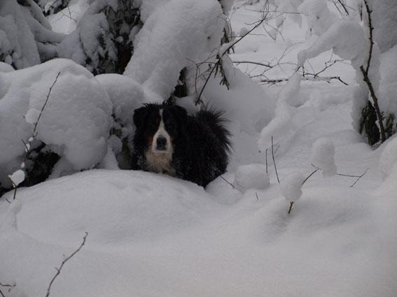 mää sitten tykkään tästä lumesta