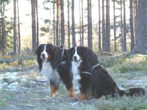Donna ja Saska
